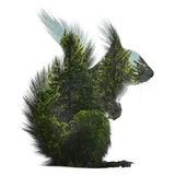Forest - Squirrel - Silhouette Photographic Print