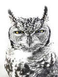 Spotted Eagle Owl, Kgalagadi Transfrontier Park, South Africa Photographic Print by James Hager