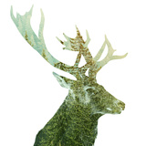 Big Buck Antlers in the Forest Photographic Print