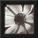 Anemone I Posters by Graeme Harris