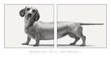 Heads and Tails Posters par Jon Bertelli