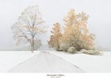 Autumn Snowfall Láminas por Alexander Volkov