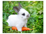 White Rabbit With a Carrot Arte