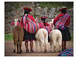 Peruvian Girls & Alpacas Peru Lámina