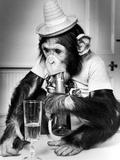 Chimpanzee at Twycross Zoo 1988 Lámina fotográfica por  Staff