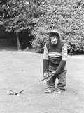 A Chimpanzee playing a round of golf Fotoprint van  Staff