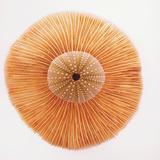 Ocean Finds I Lámina fotográfica por Jairo Rodriguez