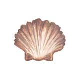 Coastal Icon Coral VI Poster von Elizabeth Medley