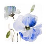 All Poppies I Premium Giclee Print by Lanie Loreth