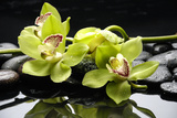 Zen Stones and Green Orchids with Water Drops Fotografisk tryk af  crystalfoto