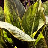 Plant Exploration I Photographic Print by Emily Navas