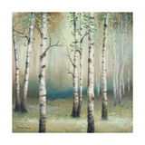 Late September Birch II Premium Giclee Print by Michael Marcon