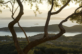 Islands in the Adriatic Sea, Corfu Through Twisted Treetrunks Fotografisk tryk af Clive Nichols