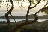 Islands in the Adriatic Sea, Corfu Through Twisted Treetrunks Fotografisk trykk av Clive Nichols