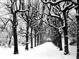 Trinity College, Oxford, Oxfordshire Fotografie-Druck von Henry Taunt