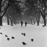 Regent's Park, London. Pigeons on a Snowy Path with People Walking Away Through an Avenue of Trees Fotografie-Druck von John Gay