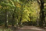 Autumn Trees in Hampstead Heath Fotografie-Druck von Natalie Tepper
