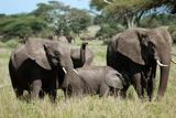 Elephant family in Zimbabwe Lámina fotográfica por Judge Stuart Namm