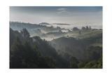 Oakland Redwood Park, East View Sunrise Valley Fog Fotografisk trykk av Henri Silberman