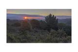 Oakland Redwood Park, East View Sunrise 2 Fotografisk trykk av Henri Silberman