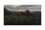 Oakland Redwood Park, East View Morning Clouds 3 Fotografisk trykk av Henri Silberman
