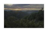 Oakland Redwood Park, East View Morning Clouds 4 Fotografisk trykk av Henri Silberman