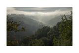 Oakland Redwood Park, East View Sunrise Valley Fog Panorama Fotografisk trykk av Henri Silberman