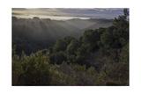 Oakland Redwood Park, East View Sunrise 5 Fotografisk trykk av Henri Silberman