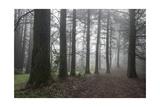 Oakland Redwood Peak trail in Fog Fotografisk trykk av Henri Silberman