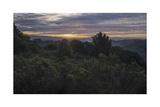 Oakland Redwood Park East View, Morning Clouds 2 Fotografisk trykk av Henri Silberman