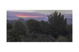 Oakland Redwood Park, East View 4 Fotografisk trykk av Henri Silberman