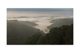 Oakland Redwood Park, East View Morning Fog 3 Panorama Fotografisk trykk av Henri Silberman