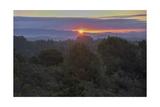 Oakland Redwood Park, East View Sunrise Fotografisk trykk av Henri Silberman