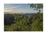 Oakland Redwood Park, East View Morning Sun Fotografisk trykk av Henri Silberman