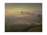 Oakland Redwood Park, East View Morning Fog Fotografisk trykk av Henri Silberman