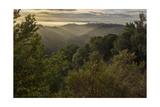 Oakland Redwood Park, East View Sunrise 6 Fotografisk trykk av Henri Silberman