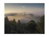Oakland Redwood Park, East View Morning Fog 2 Fotografisk trykk av Henri Silberman