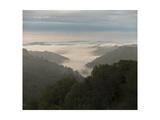 Oakland Redwood Park, East View Morning Fog 3 Fotografisk trykk av Henri Silberman