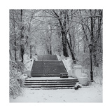 Prospect Park Snowy Staircase Photographic Print by Henri Silberman
