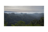 Oakland Redwood Park East View, Clouds, Panorama Fotografisk trykk av Henri Silberman