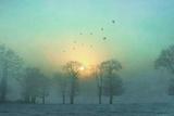 Frozen Fotografie-Druck von Viviane Fedieu Daniel