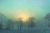 Frozen Fotoprint van Viviane Fedieu Daniel