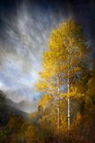 Fall Fantasy 2 Fotografie-Druck von Ursula Abresch