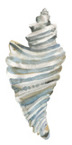 Coastal Seashells - Drill Giclée-Druck von Sandra Jacobs