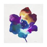 Rainbow Flower Prints by Paulo Romero