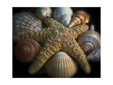Starfish and Sea Shells Lámina fotográfica por George Oze