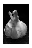 Garlic Bulb BW Fotografisk tryk af Steve Gadomski