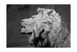 Lion of the Art Institute Chicago BW Fotografie-Druck von Steve Gadomski