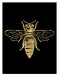 Bumblebee Golden Black Affiches par Amy Brinkman