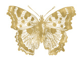 Butterfly 1 Golden White Posters par Amy Brinkman